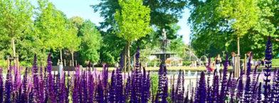 Picknick i Lund 6 augusti 2016
